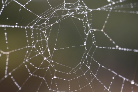 Dew on early morning spider web