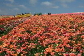 Flower fields