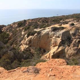 Torrey Pine Landscape