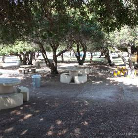 Picnic tables beneath the pepper trees