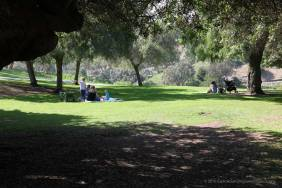 Grassy area for picnics and play.