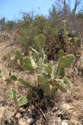 Near the Oak Canyon Trail